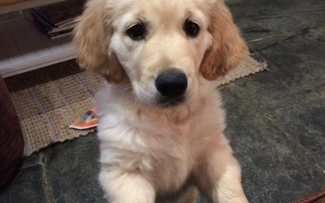 Top 5 Doggie adventures
