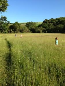 wild meadow fun