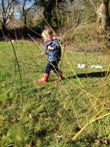 Willow planting